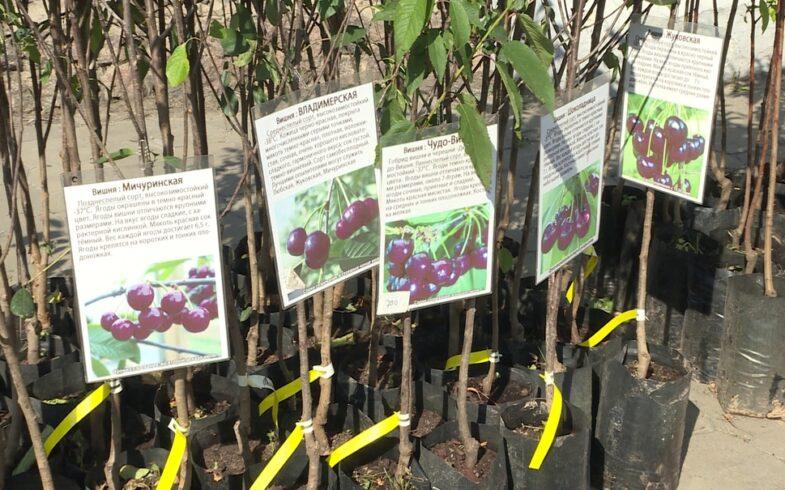Экзотические растения привезли в Липецк