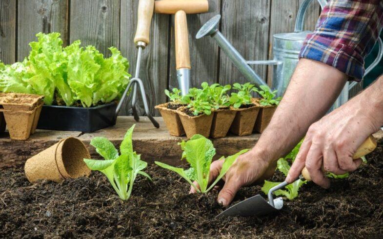 В Союзе садоводов разъяснили, введут ли в России «налог на огород»