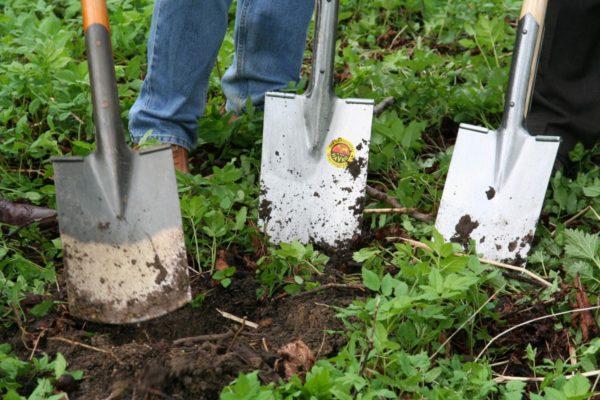 Как защитить участок от массового нашествия вредителей после теплой зимы