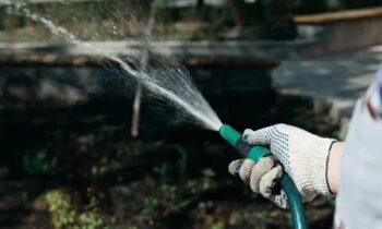 В России придумали защиту урожая без опрыскивания химикатами
