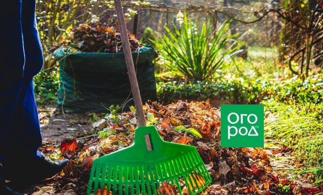 30 дел в огороде, саду и цветнике в сентябре