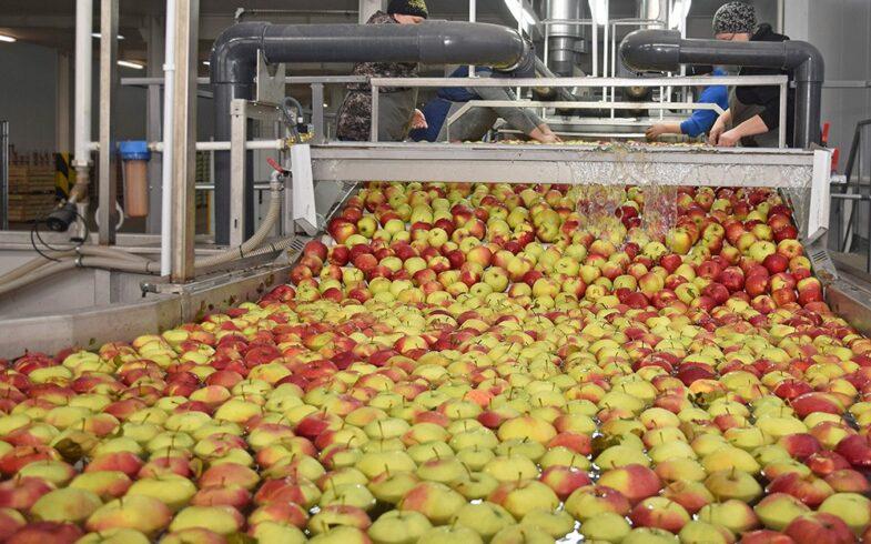 Около 89 тысяч тонн плодов и ягод собрано в Липецкой области в 2020 году