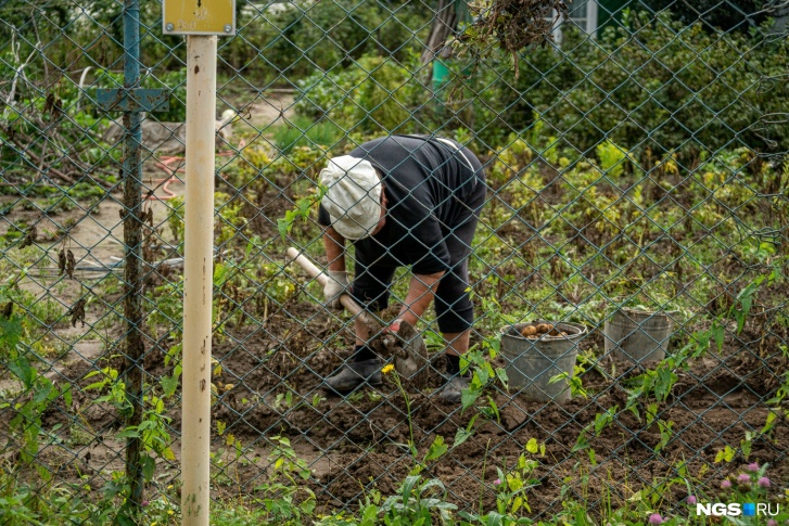 Ройте яму: за что дачники рискуют получить штраф в этом сезоне