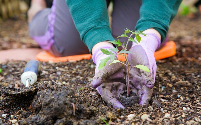 Новая правкомиссия займется садоводами и огородниками