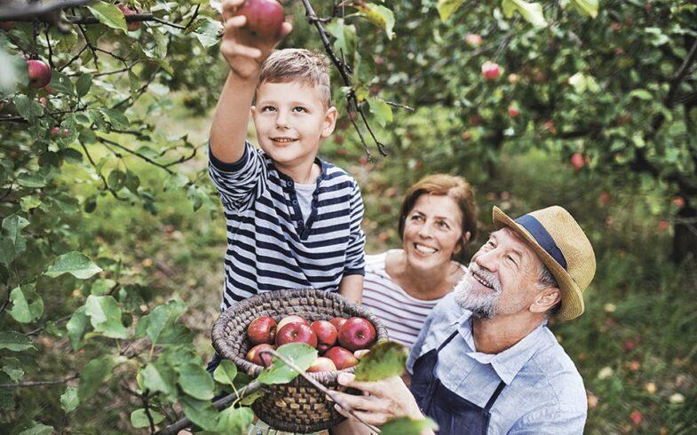 Сочный неликвид: В России — небывалый урожай яблок, но дачники вынуждены тоннами выбрасывать их на помойку